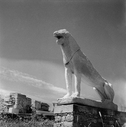 Αρχαϊκό λιοντάρι στο άνδηρο των λεόντων. Δήλος, 1950-1955 Βούλα Θεοχάρη Παπαϊωάννου (ΦΑ_6_Β.10806α)